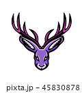 野兎 兎 ウサギのイラスト 45830878