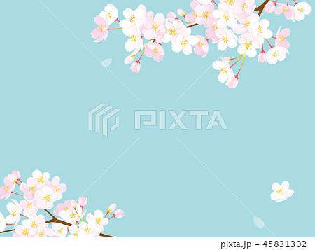 桜 背景イラスト 45831302