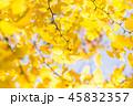 銀杏 秋 葉の写真 45832357