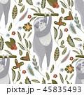 ナマケモノ フラット 平のイラスト 45835493