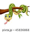 動物 小枝 枝のイラスト 45836868