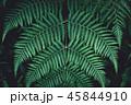 シダ グリーン 緑の写真 45844910