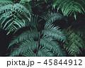 シダ グリーン 緑の写真 45844912