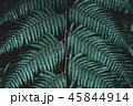 シダ グリーン 緑の写真 45844914