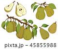 洋梨 梨 果物のイラスト 45855988