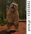 熊 グリズリー 動物のイラスト 45858882