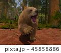 熊 グリズリー 動物のイラスト 45858886