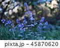 紫の花 45870620