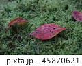 苔の上の落ち葉 45870621