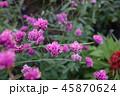 赤紫の花 45870624