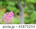 サルスベリ 花 ピンクの写真 45873254