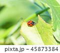 てんとう虫 虫 昆虫の写真 45873384