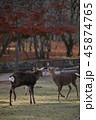 奈良公園 動物 鹿の写真 45874765