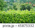 タイ王国チェンライ県の風景(View in Chiang Rai, Thailand) 45875332