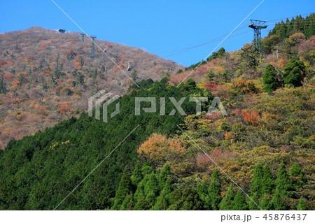 鶴見岳の紅葉と別府ロープウェイ 45876437