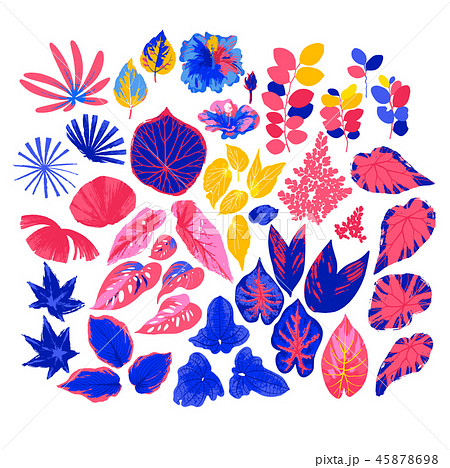Vector collection of different exotic leaves drawn in the technique of rough brush 45878698