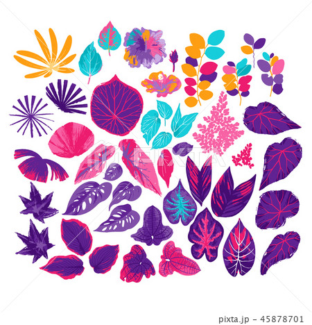 Vector collection of different exotic leaves drawn in the technique of rough brush 45878701