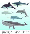 いるか イルカ 海豚のイラスト 45883162