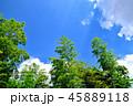 青空 竹 竹林の写真 45889118