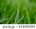 草の朝露 45899989