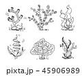 海草 プランツ 植物のイラスト 45906989