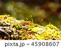 大菩薩峠の苔 45908607