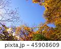 大菩薩峠の秋 45908609