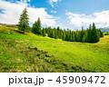 景色 風景 森林の写真 45909472