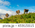 Cows grazing on the hill 45915015