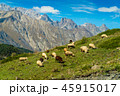 goats and sheep grazing on Hill 45915017