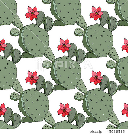 Vector Cactus. Green engraved ink art.Seamless background pattern. Fabric wallpaper print texture. 45916516