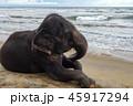 ゾウ 象 女の写真 45917294