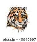 タイガー トラ 虎のイラスト 45940997