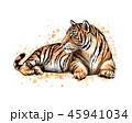 タイガー トラ 虎のイラスト 45941034