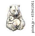 くま クマ 熊のイラスト 45941061