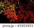 ライトアップ 45953953