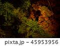 夜の森 45953956