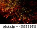 ライトアップされた紅葉 45953958