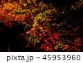 ライトアップ 45953960