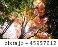 紅葉 秋 晴れの写真 45957612
