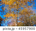 木 自然 紅葉の写真 45957900