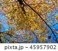 枝 自然 紅葉の写真 45957902