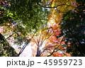 もみじ 紅葉 秋の写真 45959723