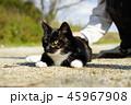 野良猫 快晴 猫の写真 45967908