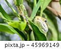 ヘビの接写 45969149