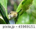 ヘビの接写 45969151