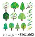 木 緑 水彩のイラスト 45981662