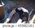 マレーグマ 馬来熊 恩賜上野動物園の写真 45982161
