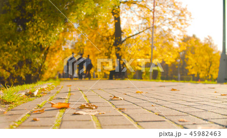 Tile on the road in the park, on it are colored leaves 45982463