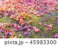 秋 紅葉 葉の写真 45983300
